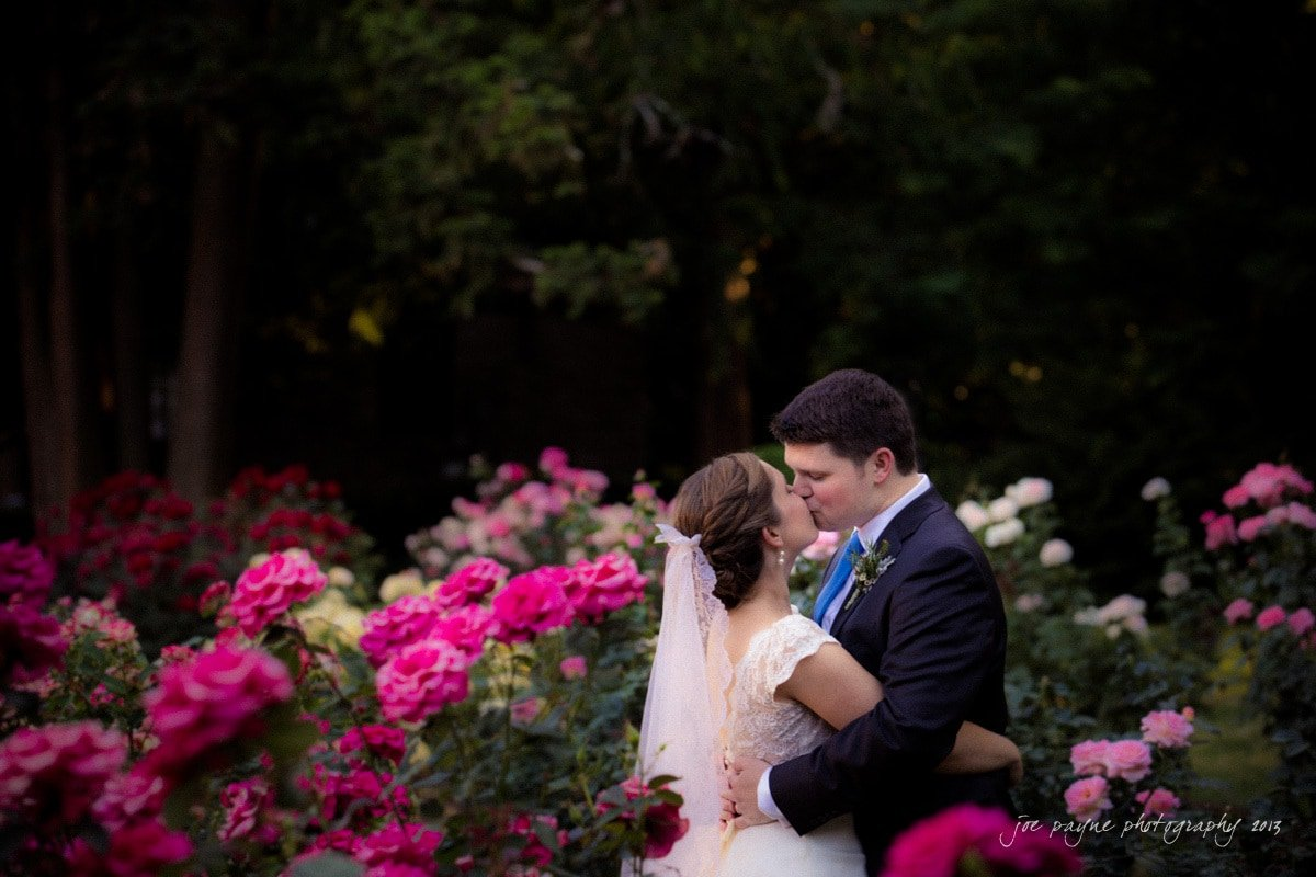 raleigh rose garden kiss