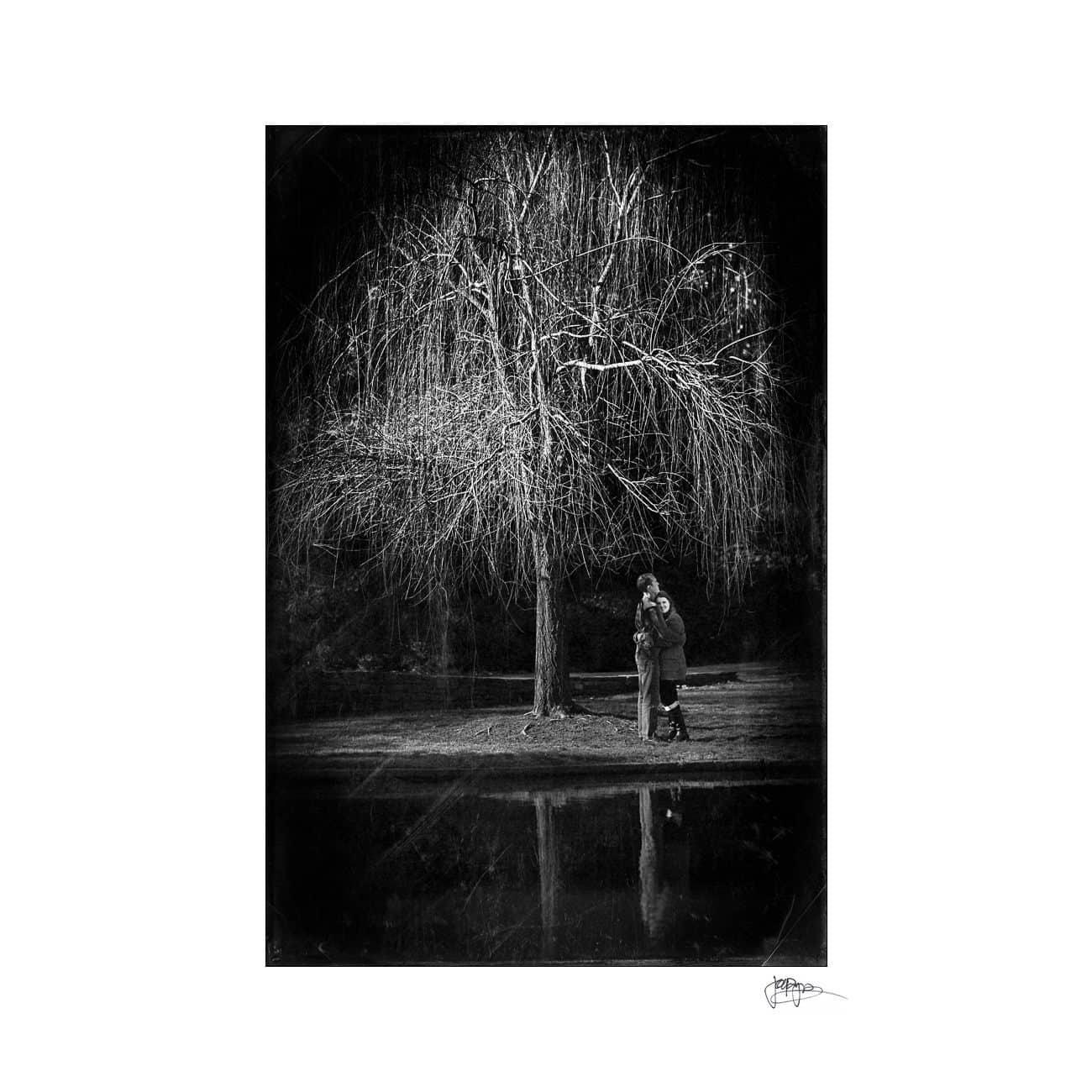 duke gardens tree and reflection